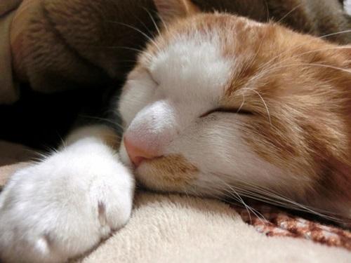 電気敷毛布 床冷え