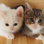 ワンルーム 狭い部屋 猫